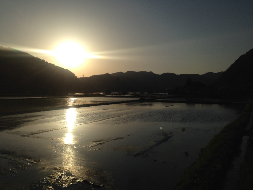 Sun setting over paddy rice fields in Ishikawa, Japan.