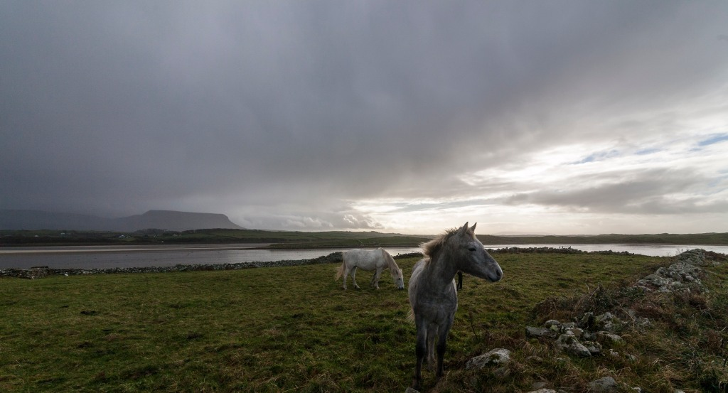 Horses under benbulben. Cycling day trip Atlantic way