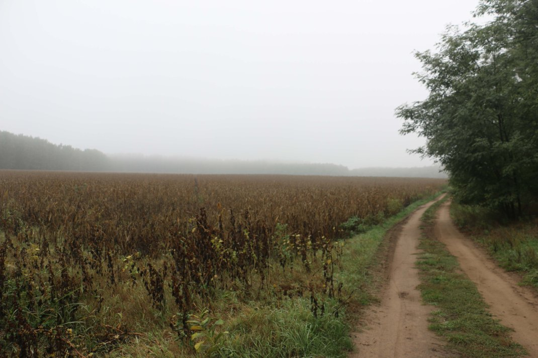 hungary-track-corn-field