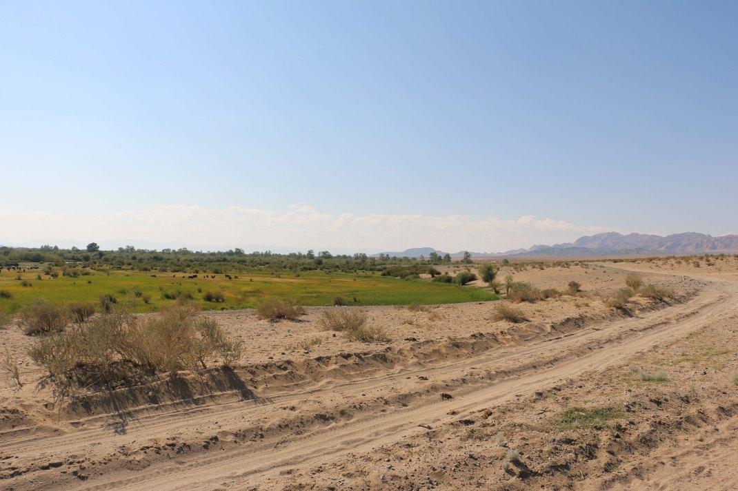 mongolian-washboard-sand-track