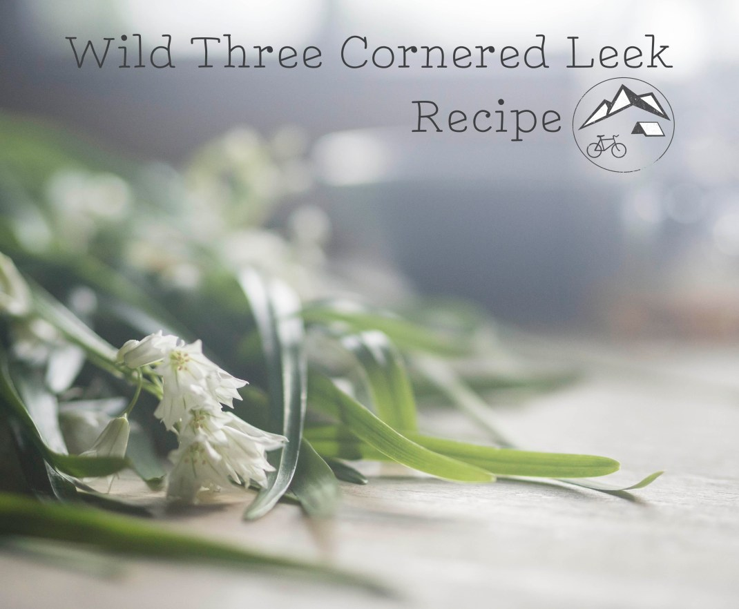 Wild three cornered leek recipe. Foraging for wild food. Crank and Cog.