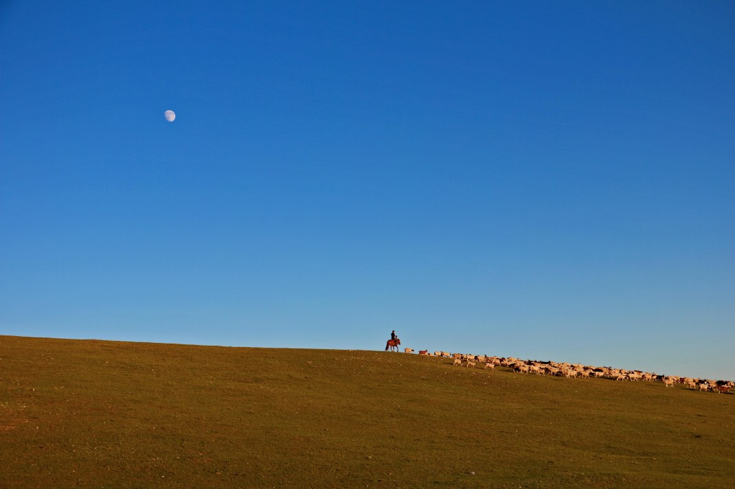 mongolian-herder-sheep-blue-sky-moon