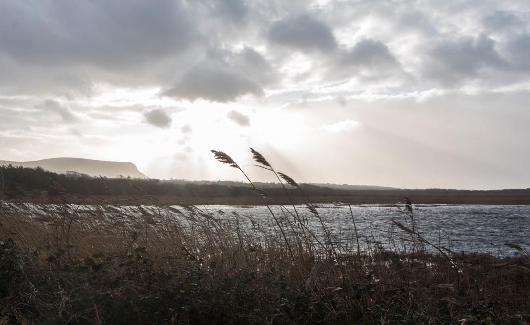 mullughmore-sligo-lake-reeds