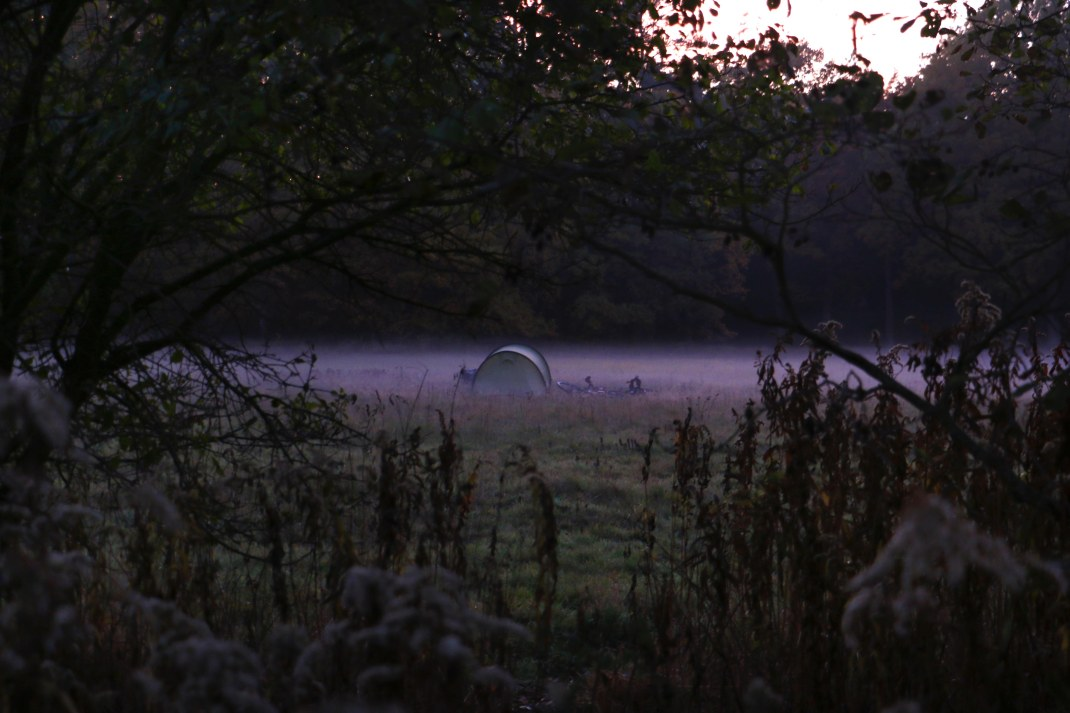 Wild camping. Camping in a field by a forest.