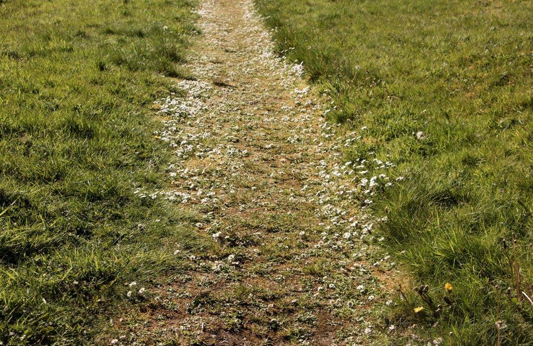 Daisy path! Bike-packing through the Ox Mountains, Sligo, Ireland, along the Wild Atlantic Way   Crank and Cog.