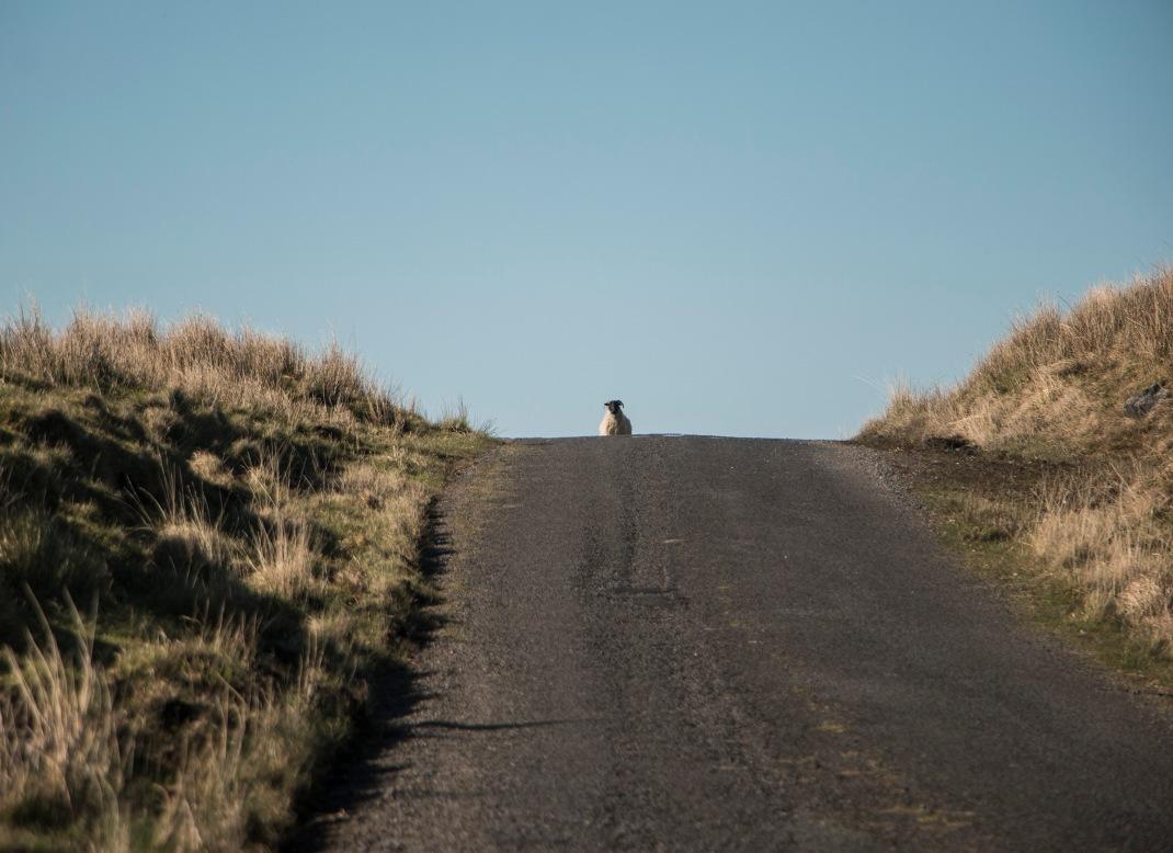 Sharing the road! Bike-packing through the Ox Mountains, Sligo, Ireland, along the Wild Atlantic Way   Crank and Cog.