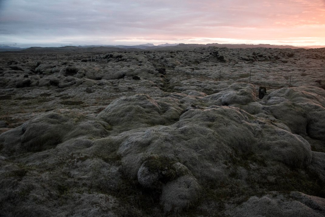 Icelandic lava field | Crank & Cog cycle tour of Iceland.