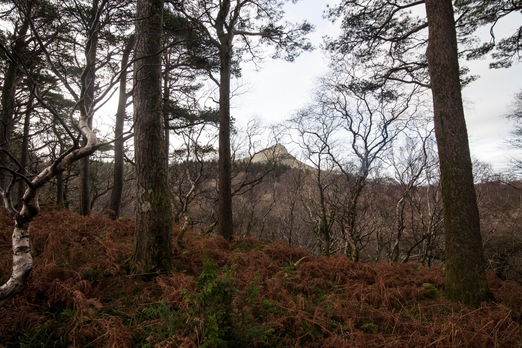 gleniff-sligo-bracken-woods