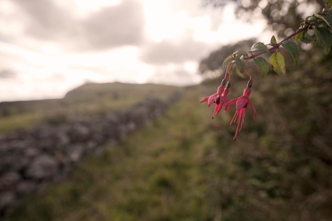 leitrim flower