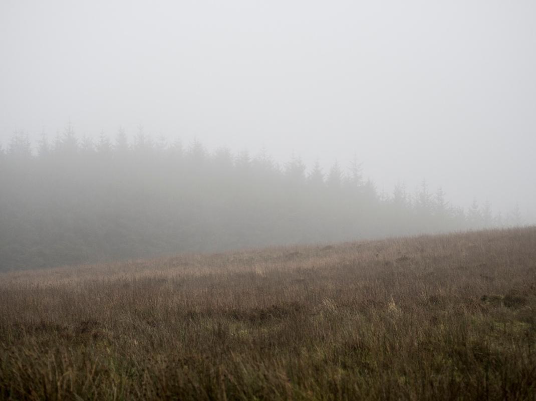 Misty forest hillside | Crank and Cog.