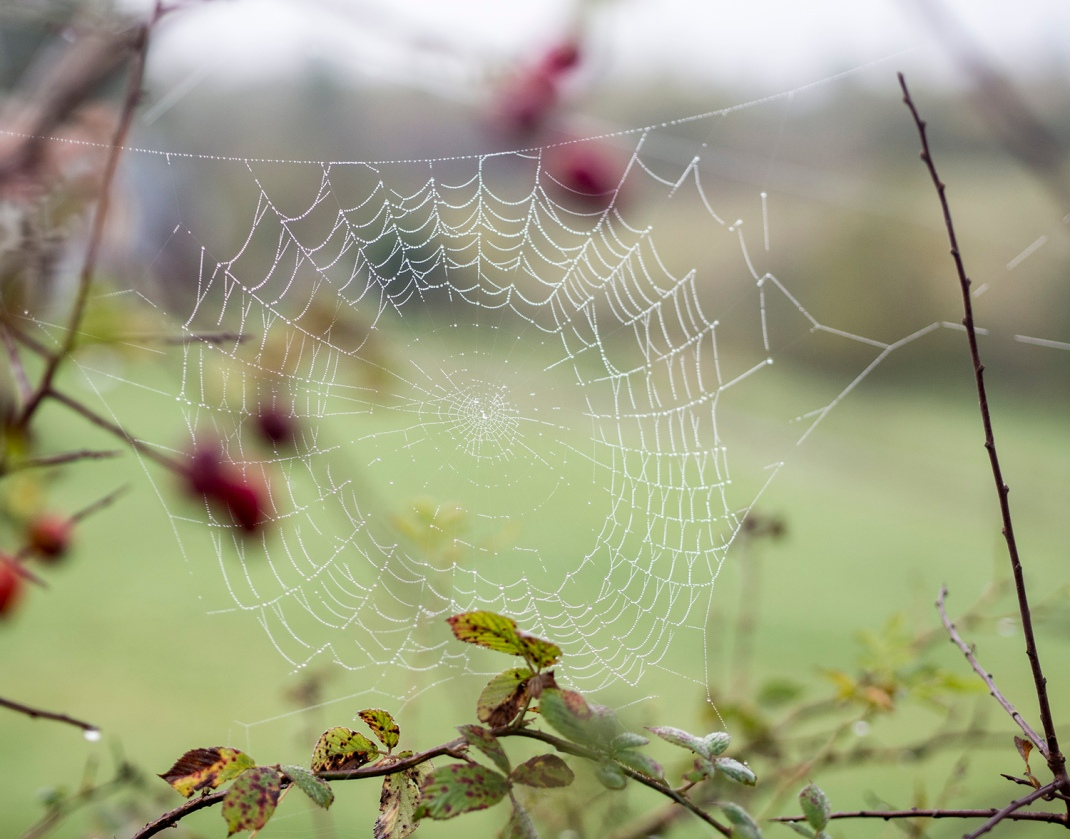 A web covered in morning dew | Crank and Cog