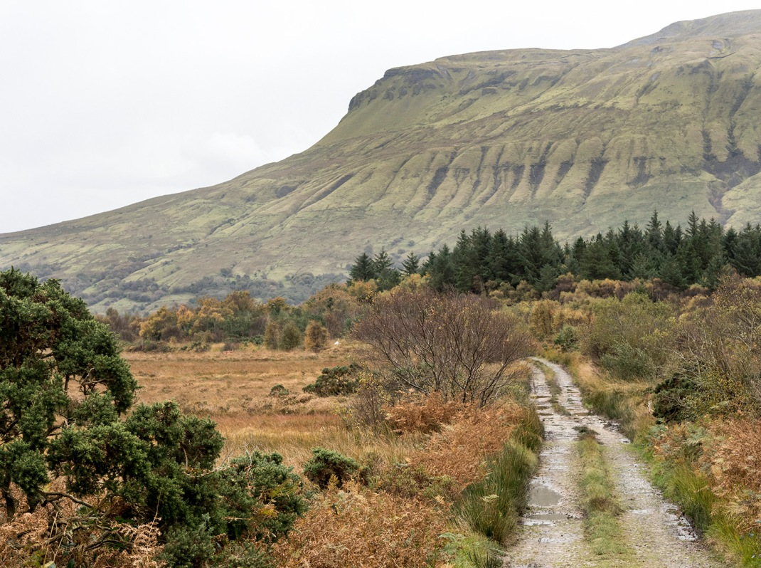 Country laneway in Leitrim, Ireland | Crank and Cog