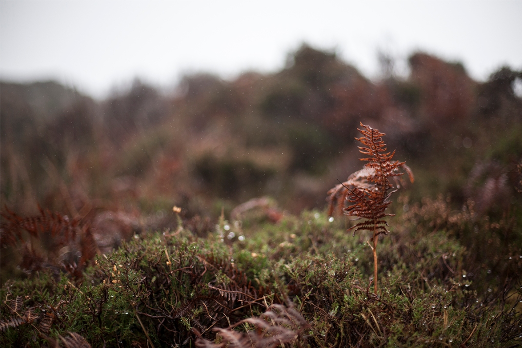 Fern on the bog.