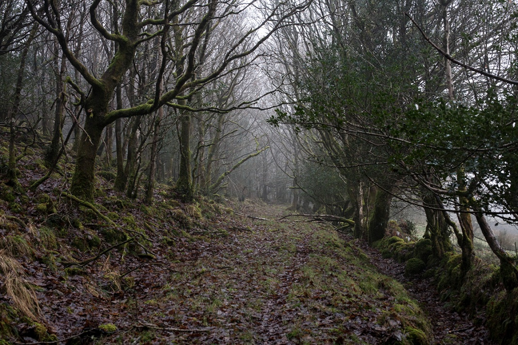 Forest track in North Leitrim