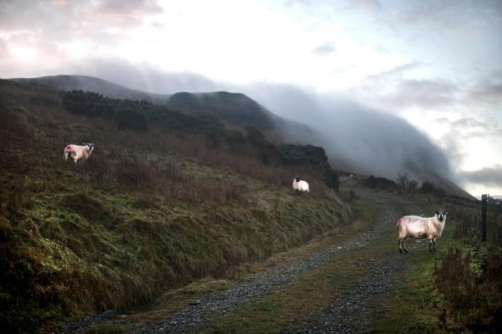 misty arroo sheep track